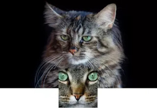 fondo de gatos