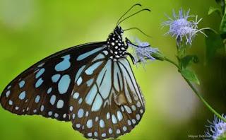 fondo de mariposas